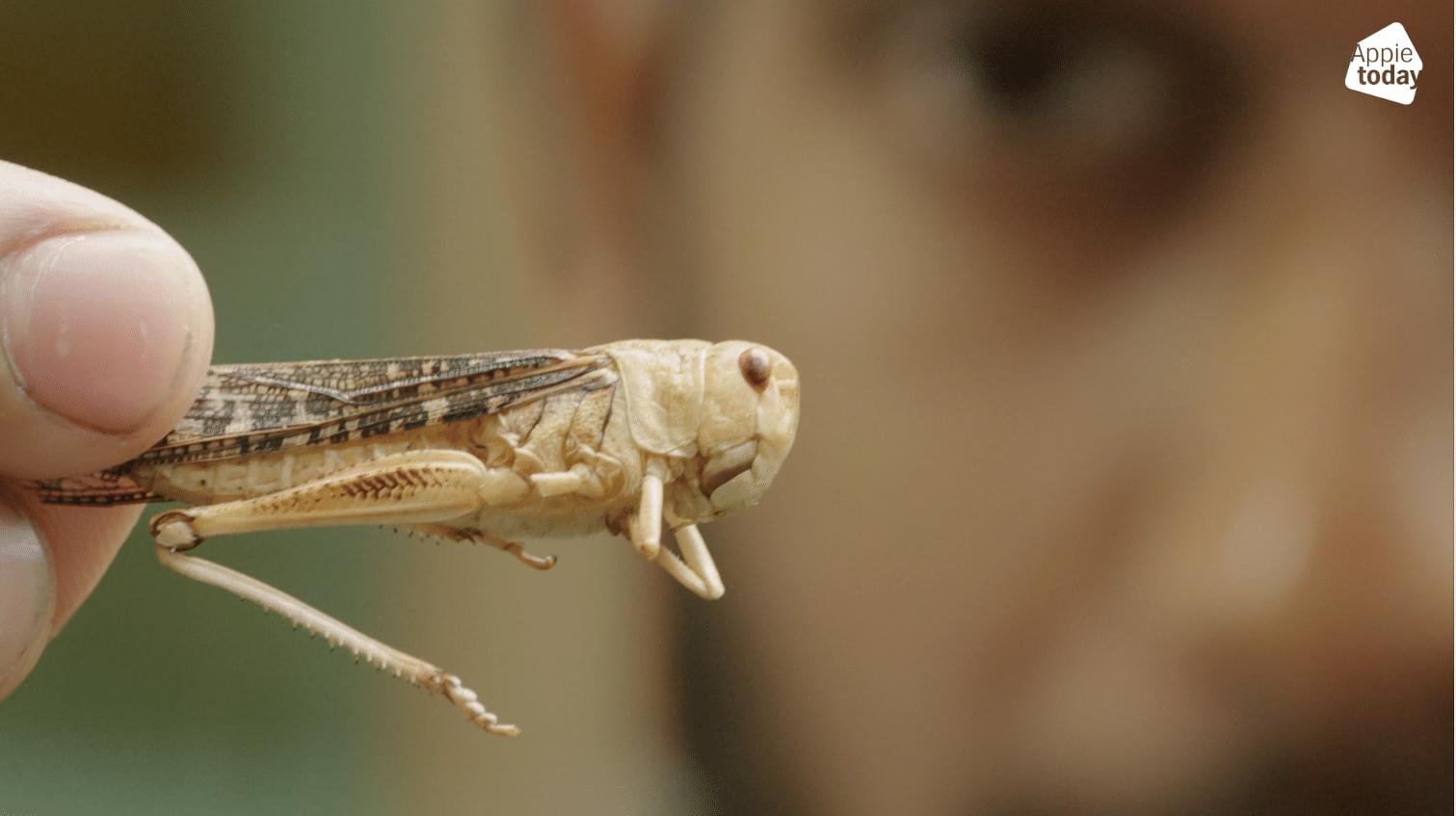 Worden insecten de nieuwe trend?