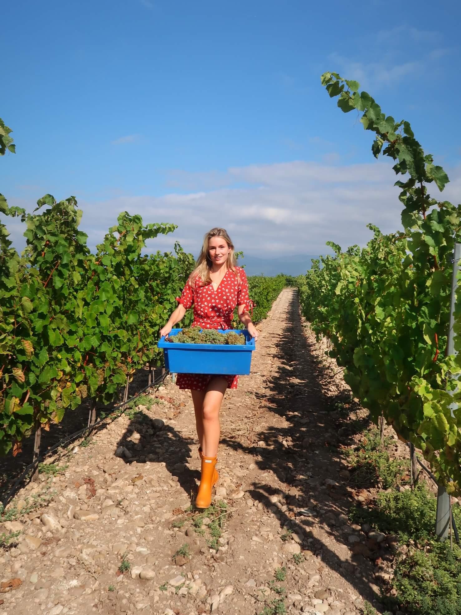 Een wijntrip in de Rioja